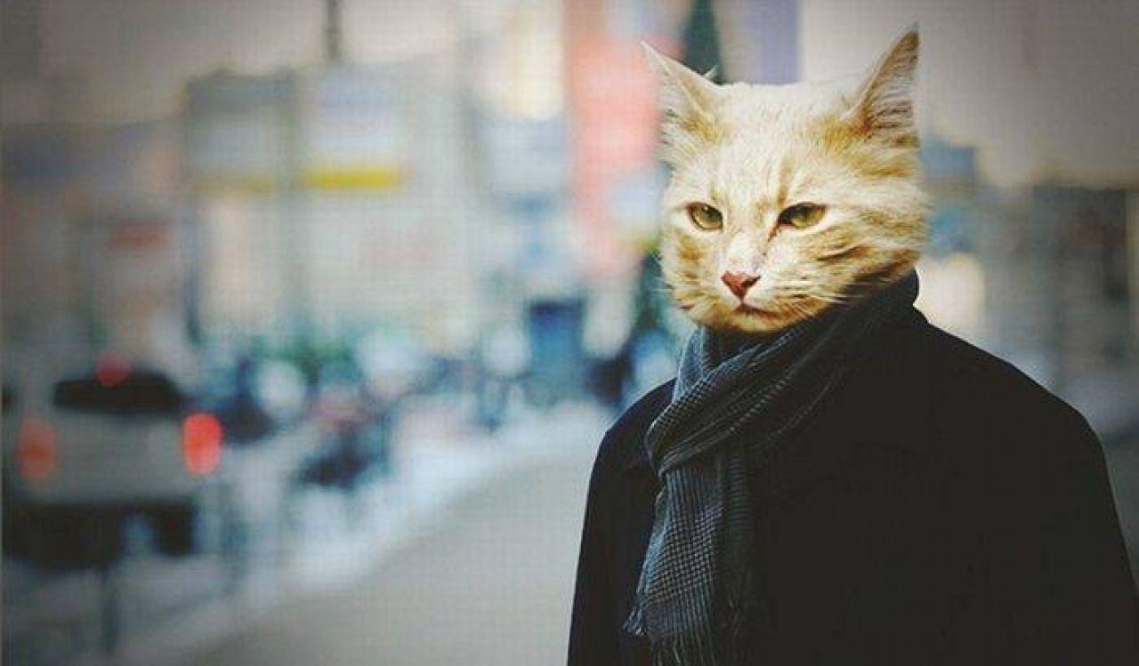 Гора кошка в крыму фото будем